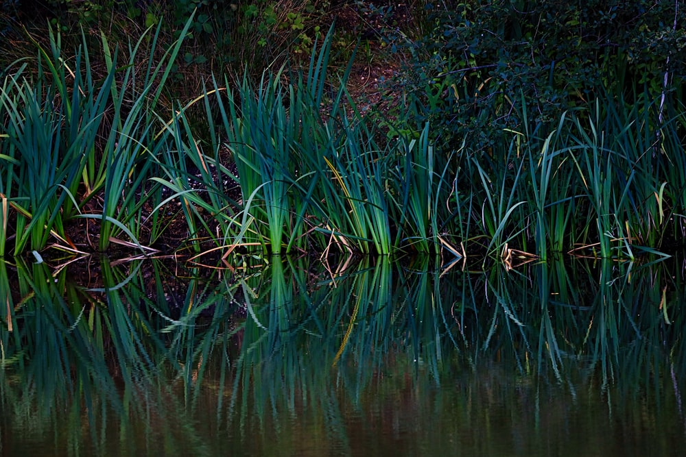 green grass on body of water