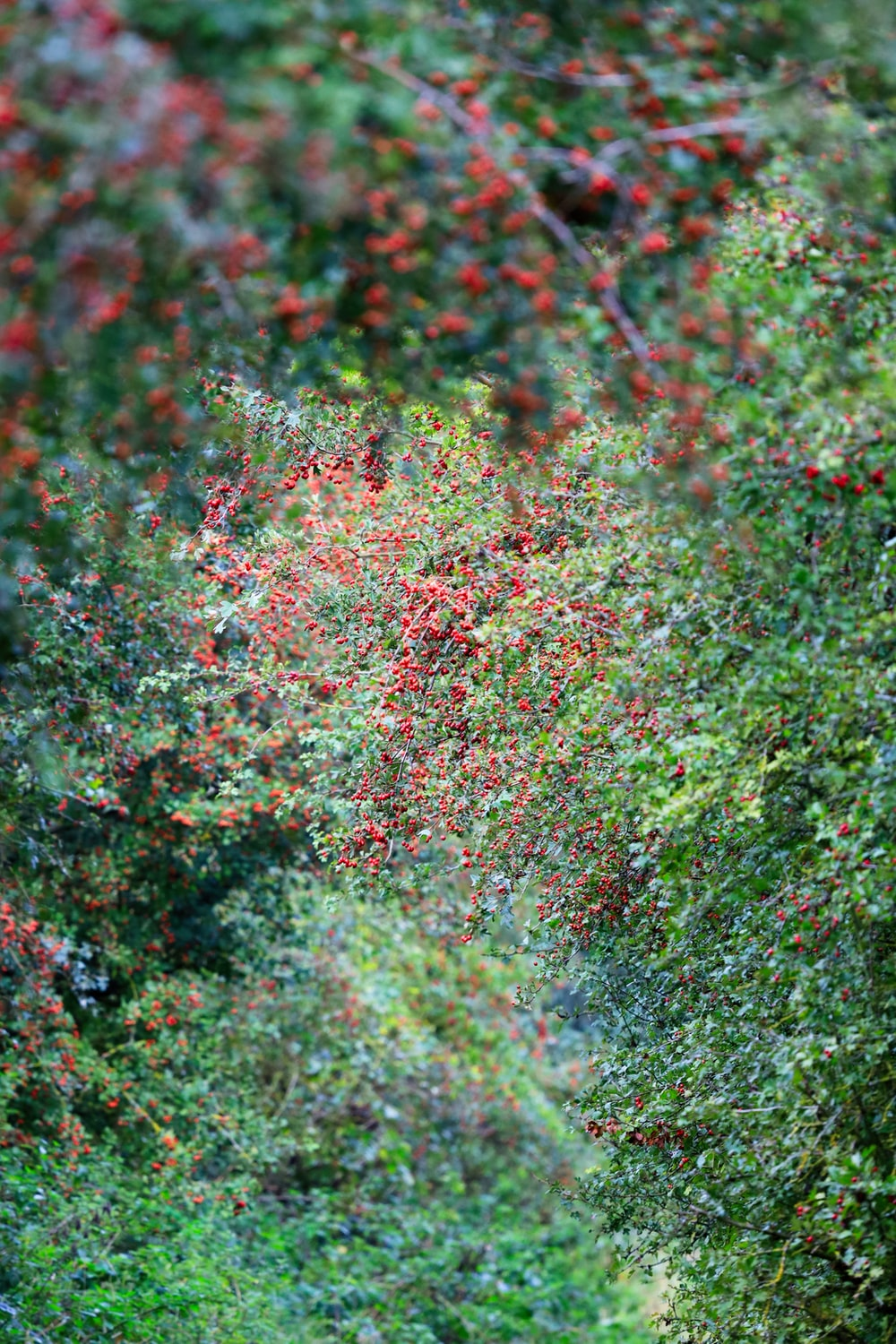 green and red plant during daytime