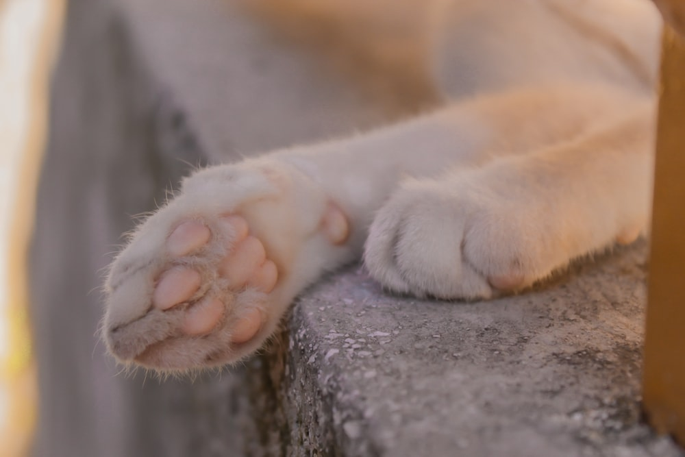 white and brown short coated dog paw