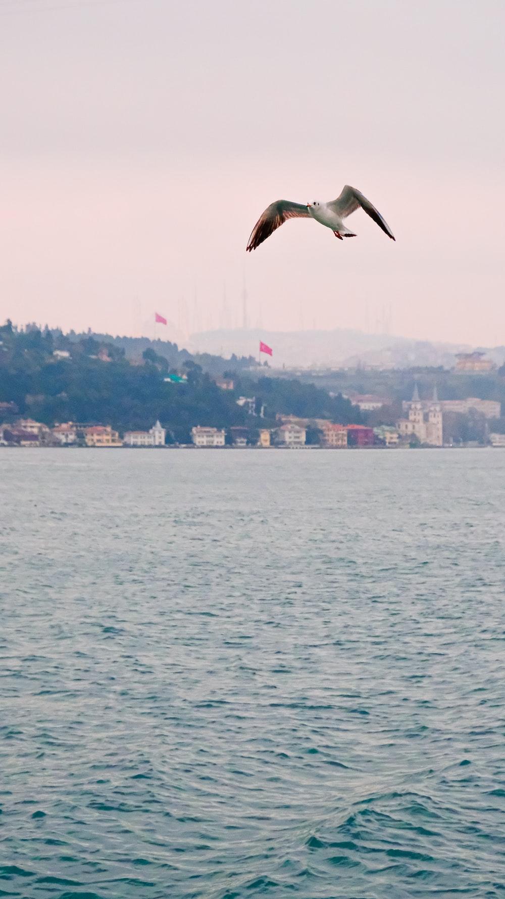 white bird flying over the city during daytime