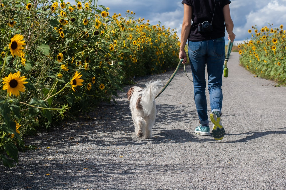 man in blue t-shirt and blue denim jeans walking with white dog on road during