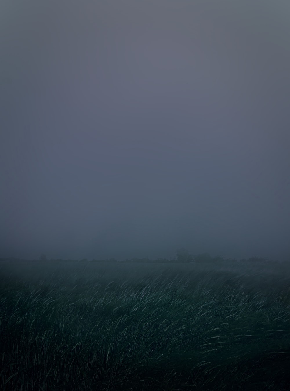 green grass field covered with fog