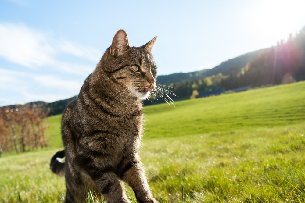 brown tabby cat on green grass field during daytime