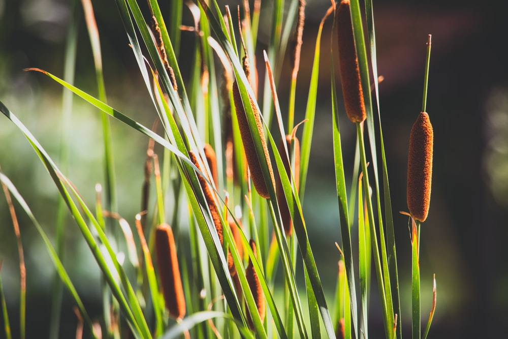 green and brown grass during daytime