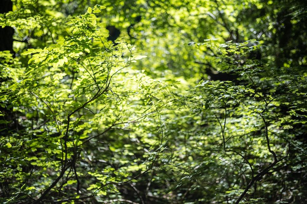 green leaf tree during daytime