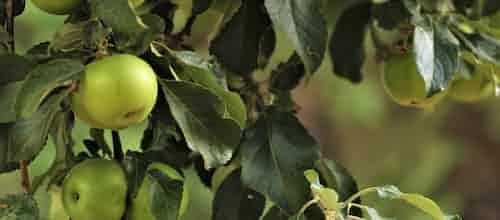 """על ספרה של ד""""ר עמלה עינת: """"העץ והתפוח: ליקויי למידה במראה בין-דורית"""""""