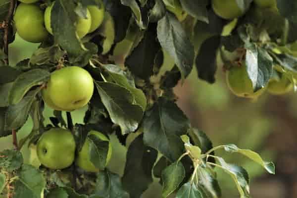 """על ספרה של ד""""ר עמלה עינת: """"העץ והתפוח: ליקויי למידה במראה בי"""