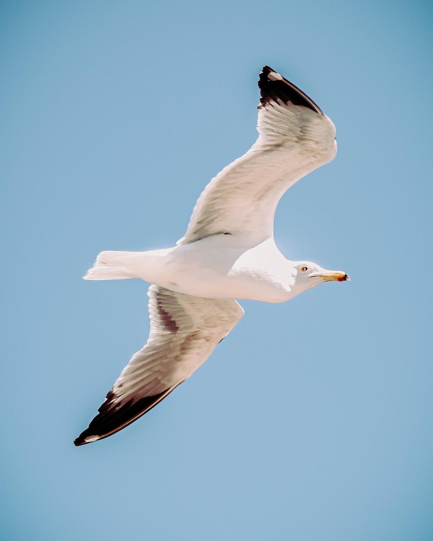 white gull flying under blue sky during daytime