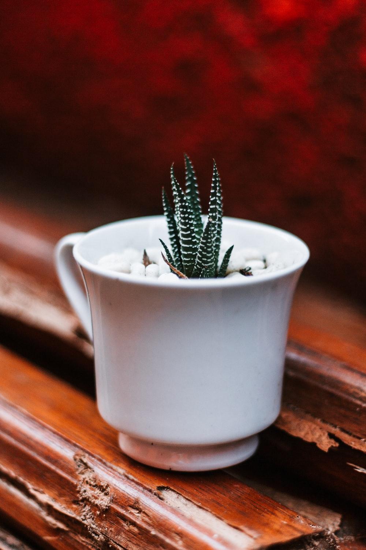 green cactus in white ceramic pot