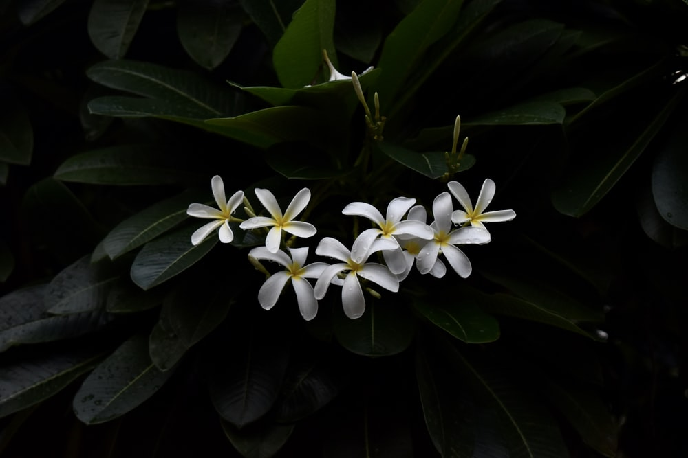 white and yellow flower with green leaves