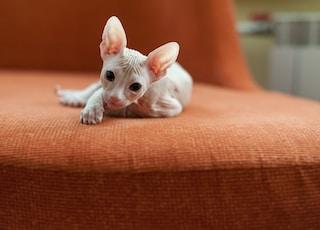 white cat lying on orange textile