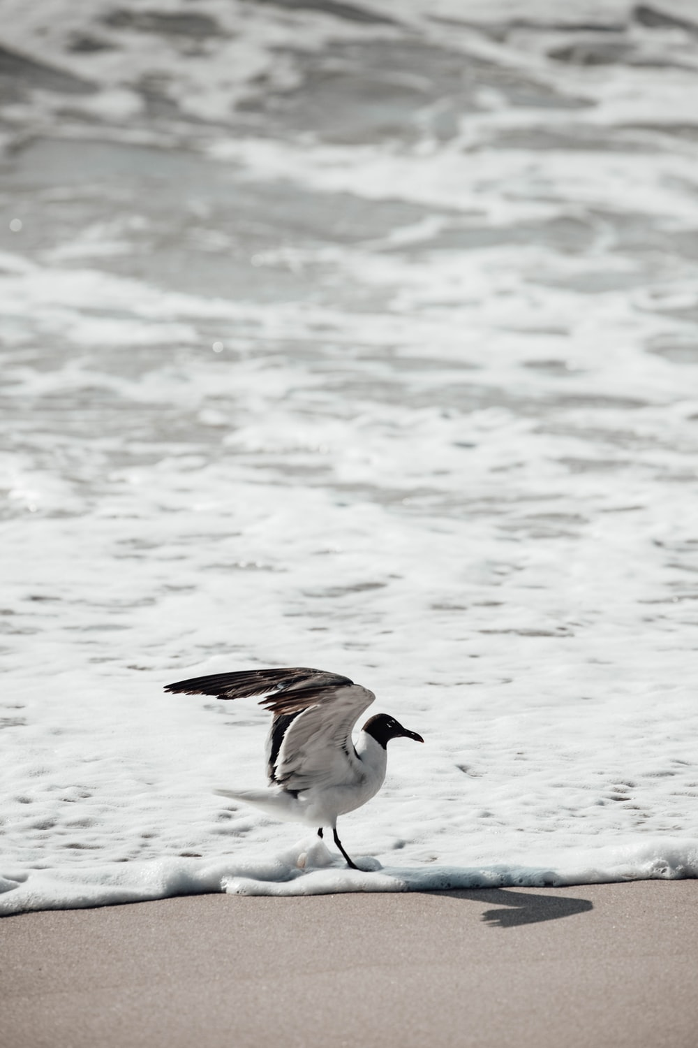 white and brown bird on water during daytime