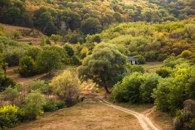 green trees and brown dirt road moldova zoom background