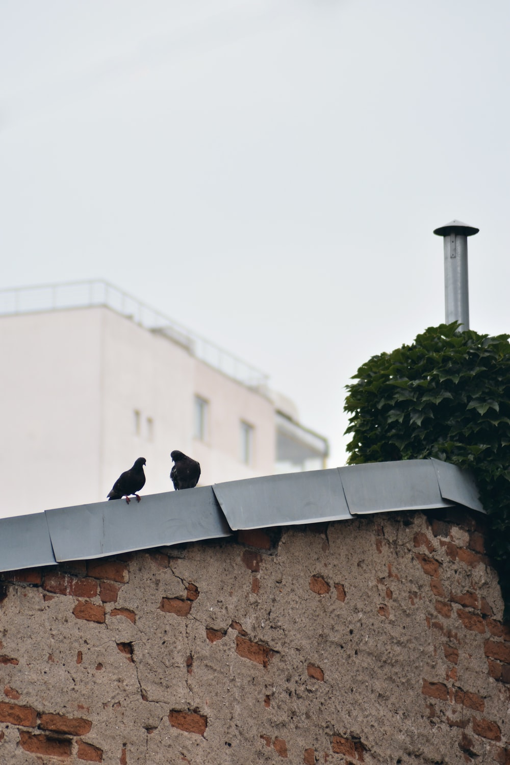 two black birds on gray concrete wall during daytime