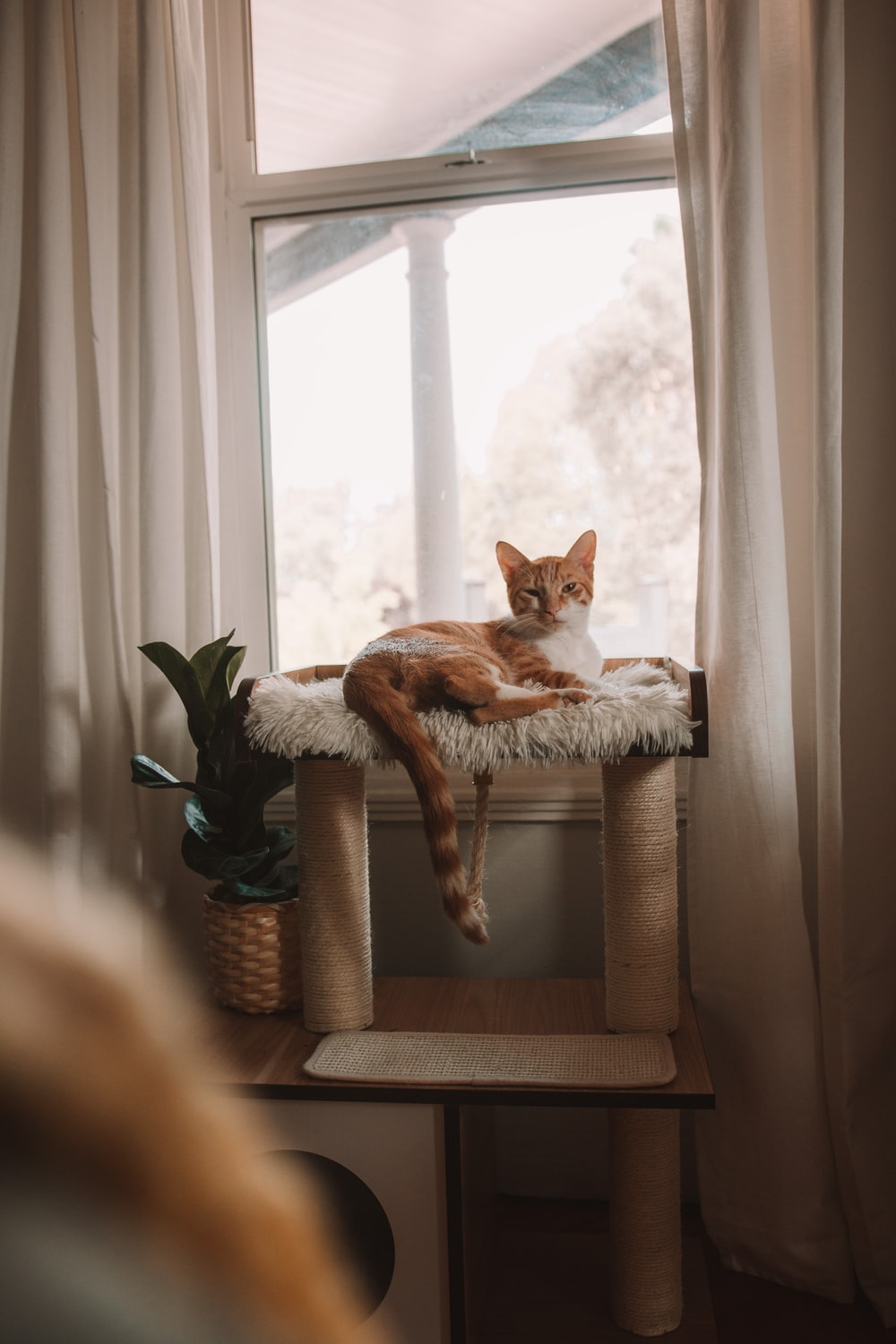 orange and white cat on brown woven basket