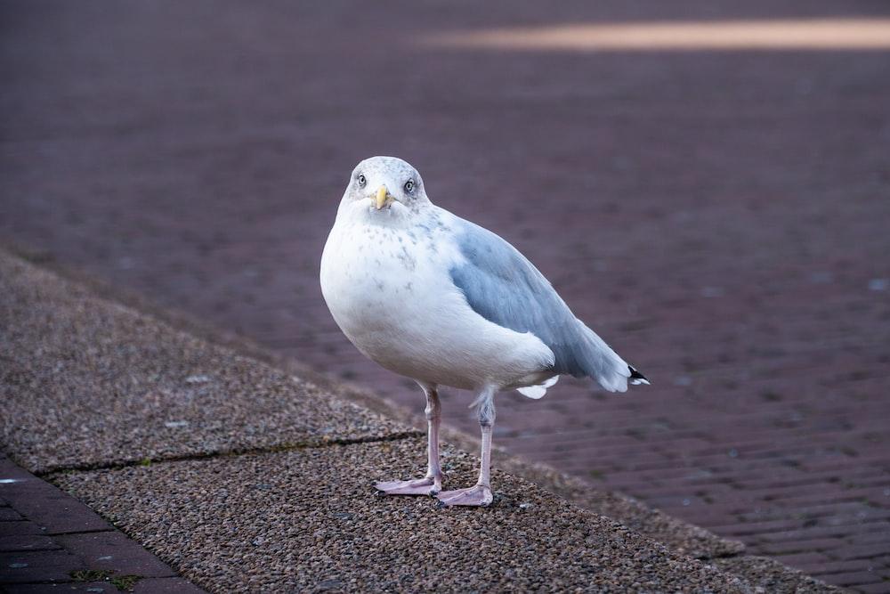 white and gray bird on gray concrete floor