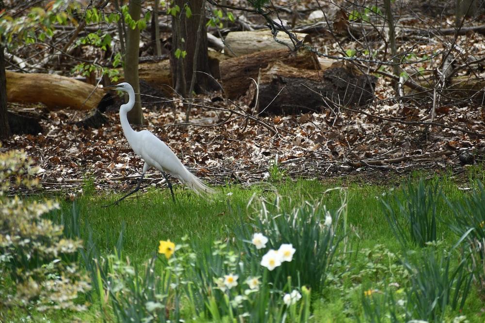 white bird on green grass near brown tree during daytime