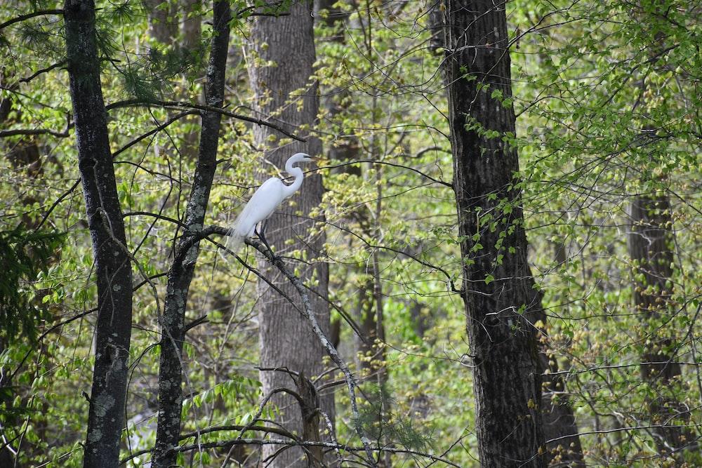 white bird on tree branch during daytime