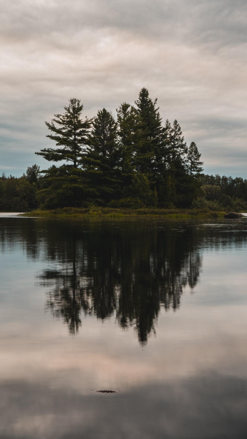 green trees beside lake during daytime