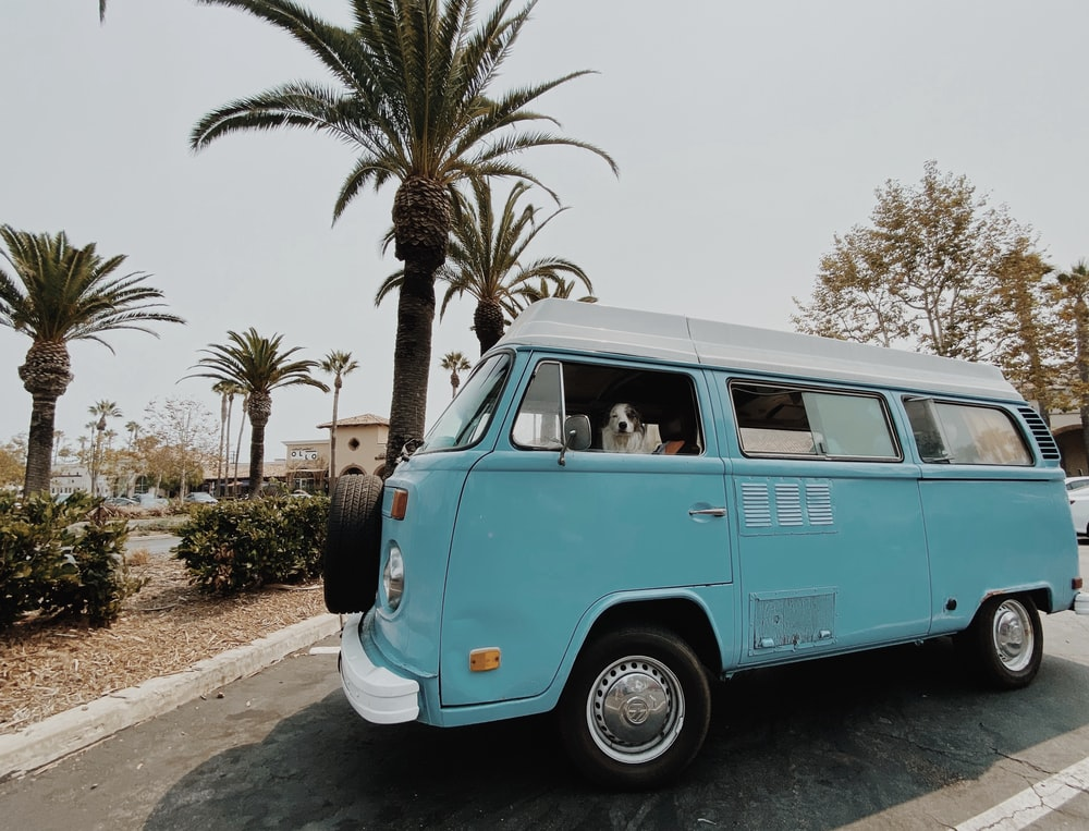 teal and white volkswagen t-2 van parked beside palm trees during daytime
