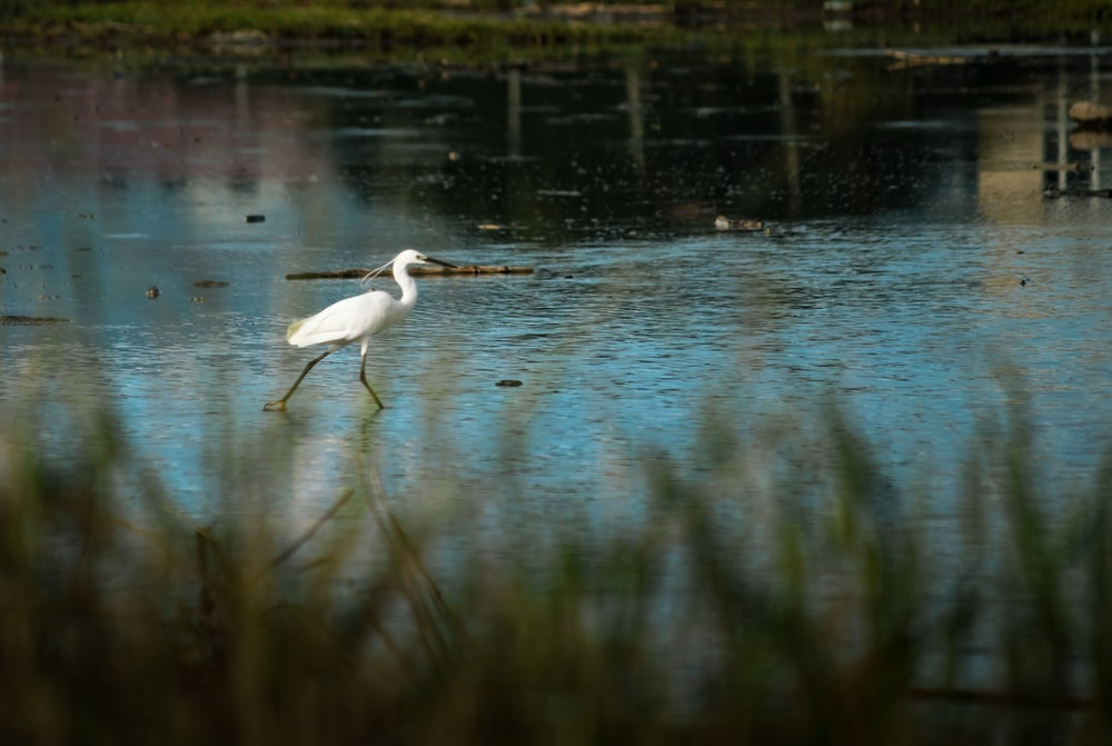 white bird on water during daytime