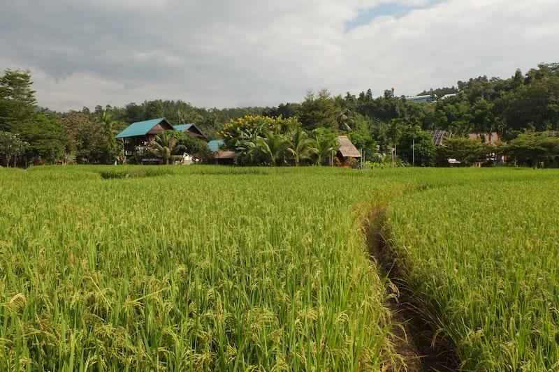 green grass field near houses