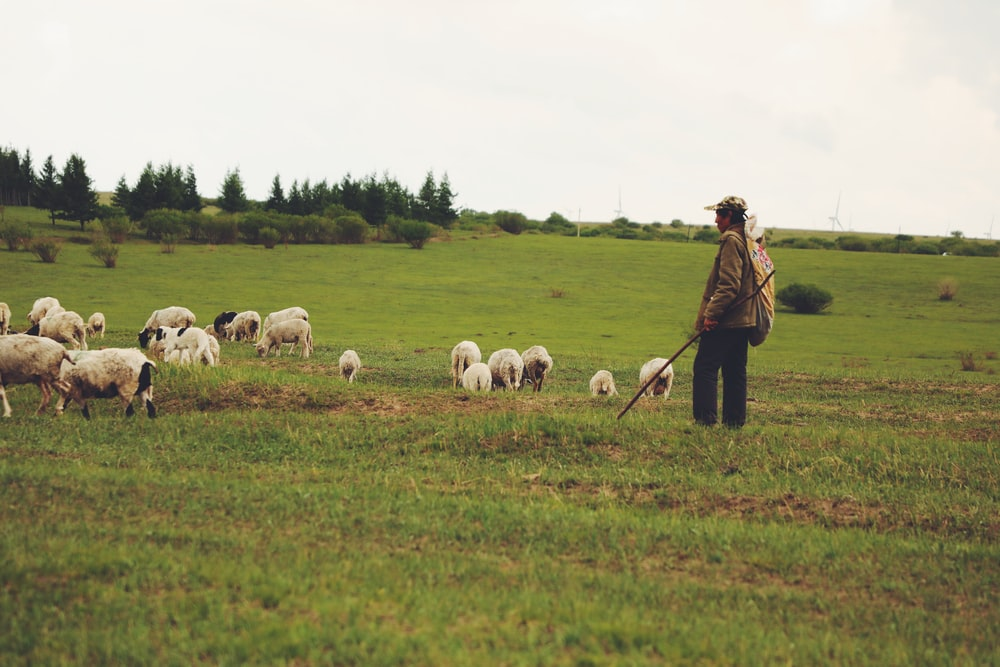man in brown jacket standing on green grass field with white sheep during daytime