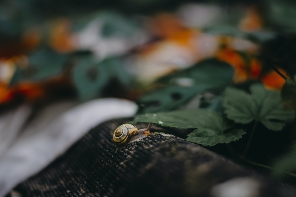 white and brown snail on green leaf