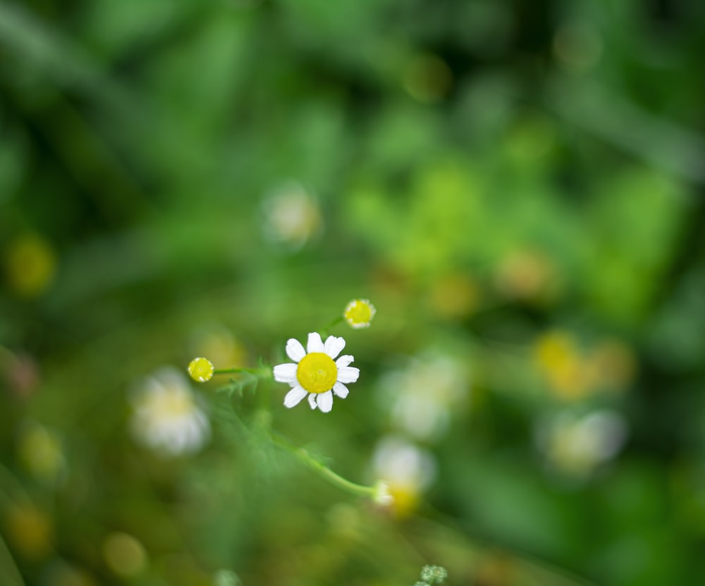 white flower with water droplets in tilt shift lens