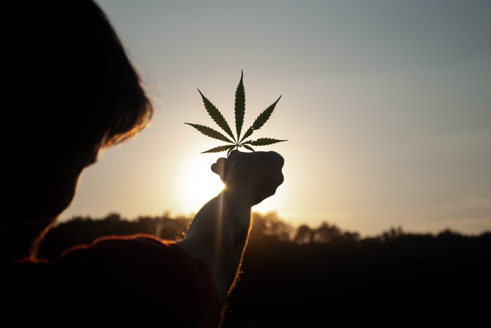 person holding white flower during sunset