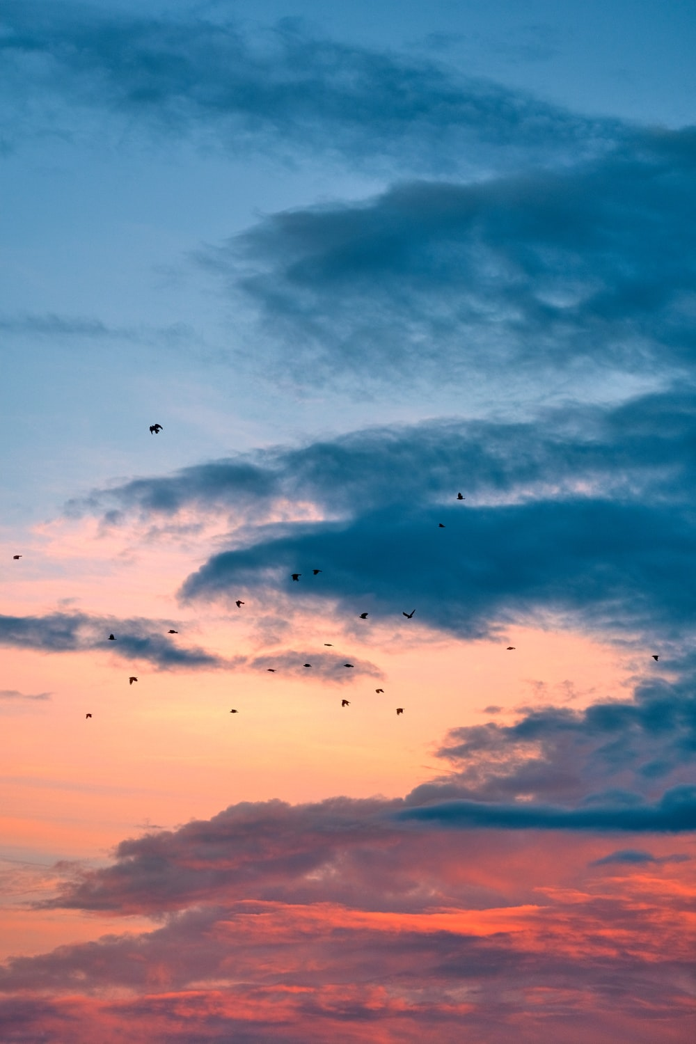 silhouette of birds flying under cloudy sky during sunset
