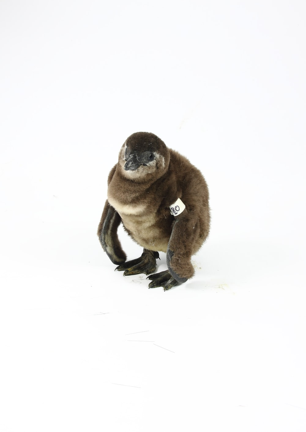 brown monkey sitting on snow covered ground