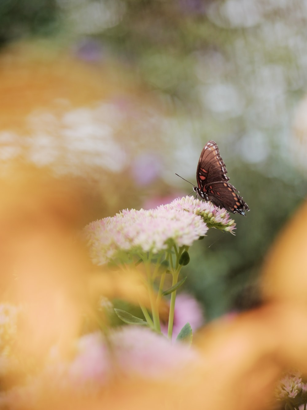 brown butterfly perched on white flower in close up photography during daytime