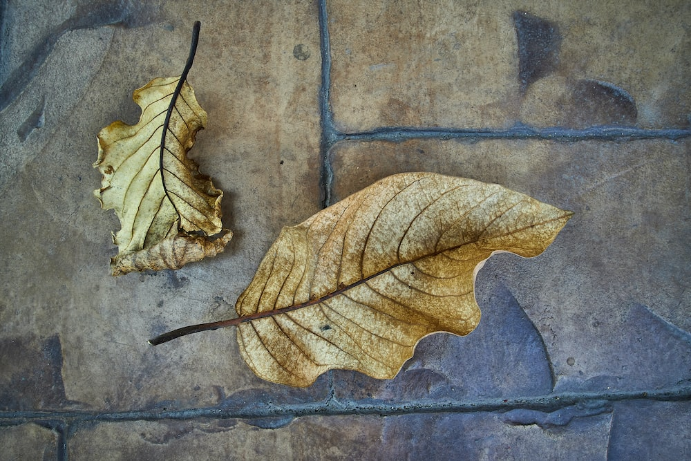 brown dried leaf on blue concrete wall