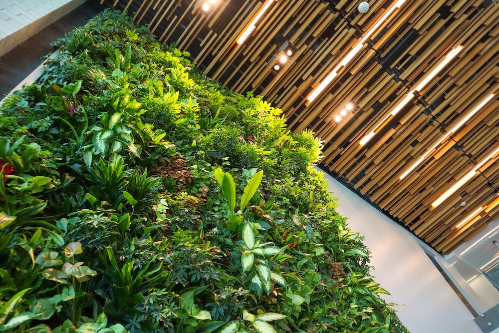 green plants on white concrete floor