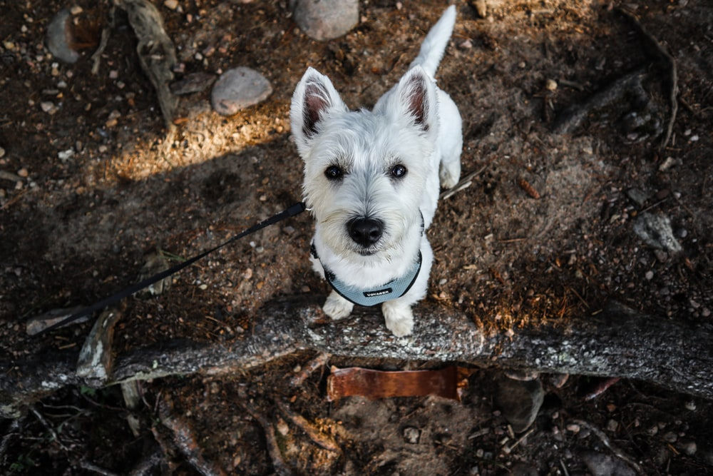 white long coat small dog on brown and black soil