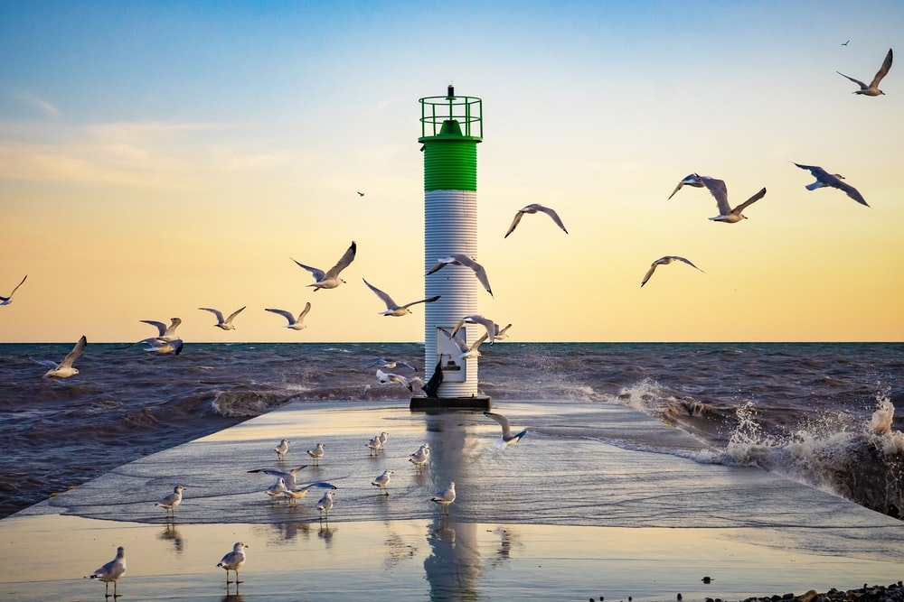 flock of birds flying over the sea during daytime