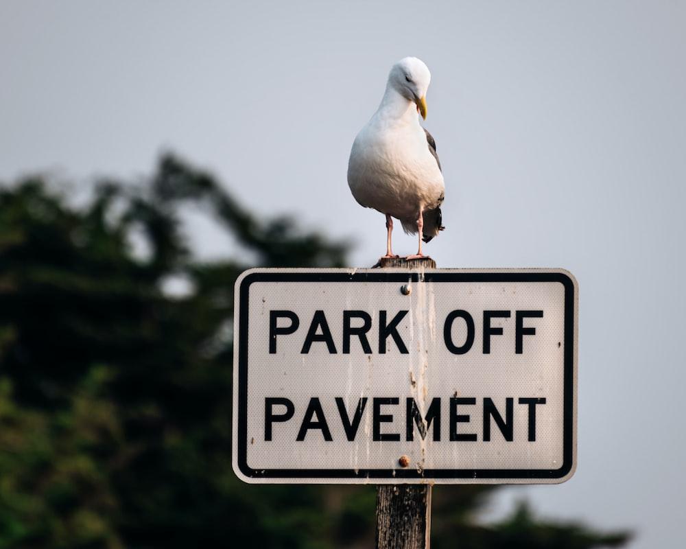 white bird on black and white no smoking sign