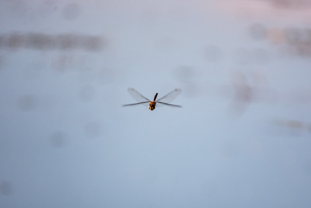 brown and black dragonfly on white wall
