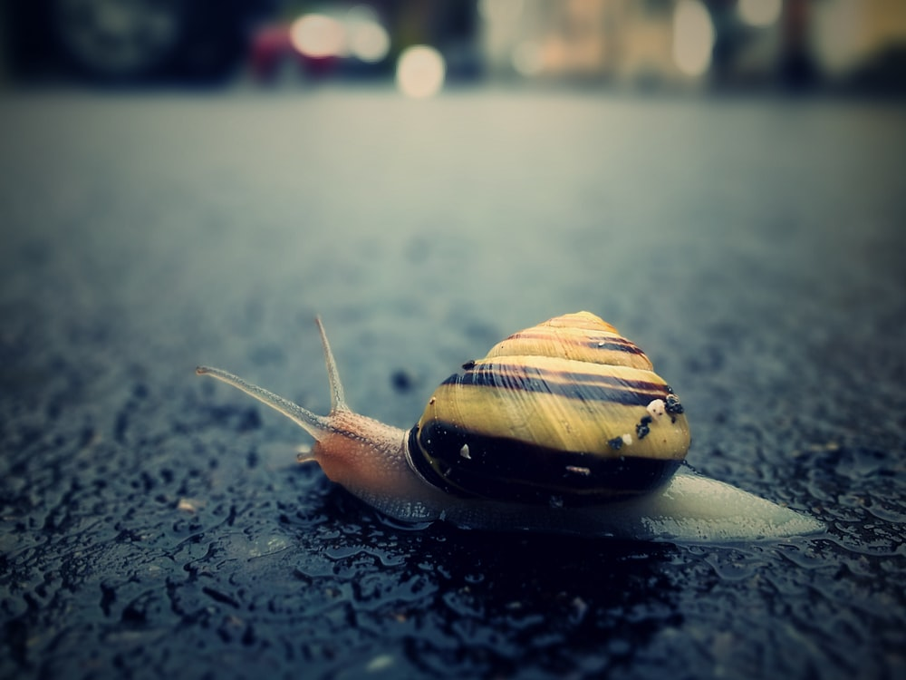 brown snail on black surface