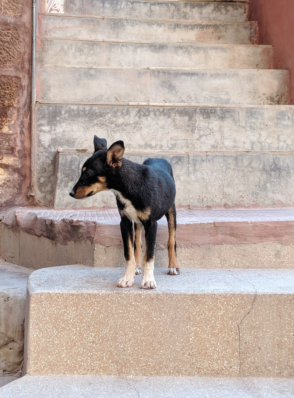 black and tan short coat medium sized dog on concrete stairs during daytime