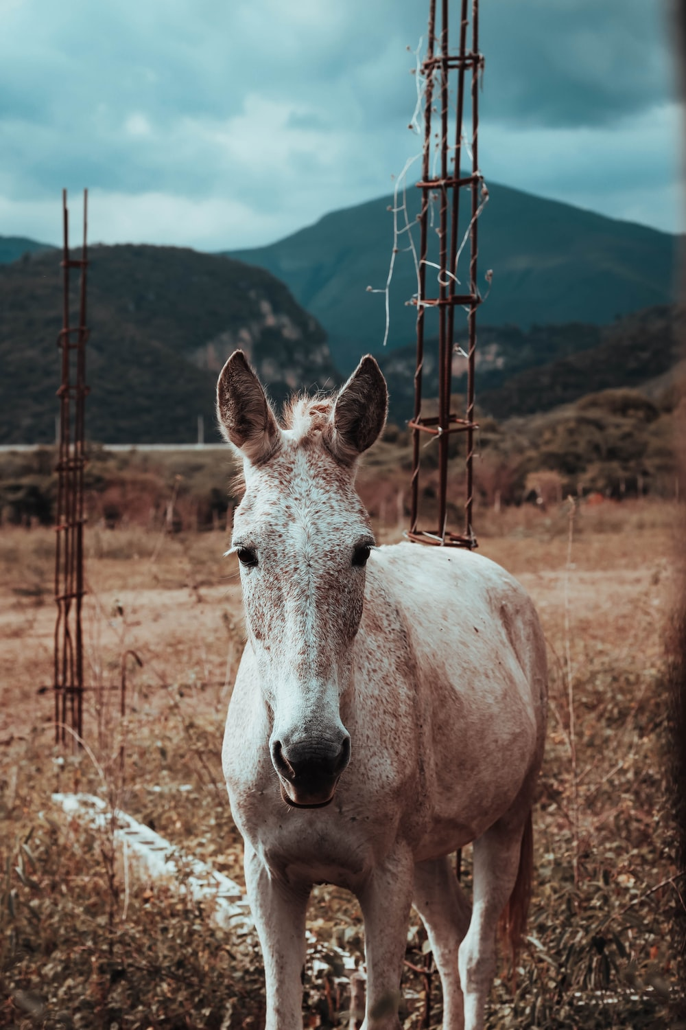 white and brown horse on brown grass field during daytime