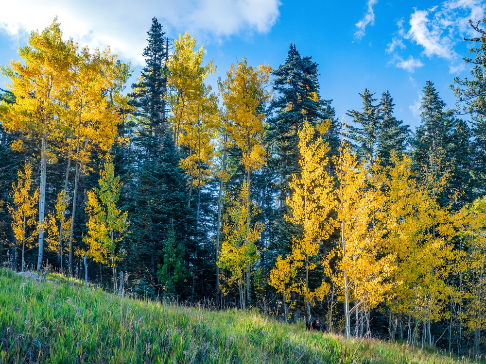 green and yellow trees under blue sky during daytime