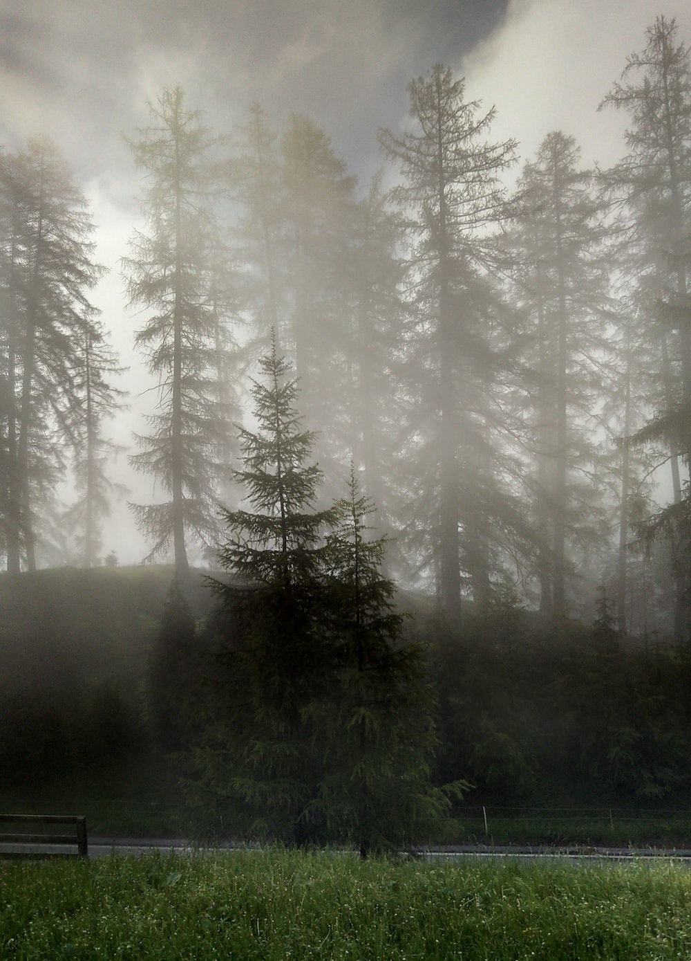 green pine trees on forest during daytime