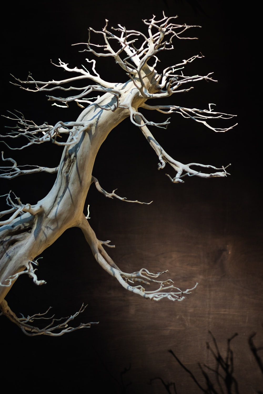 brown and black tree branch
