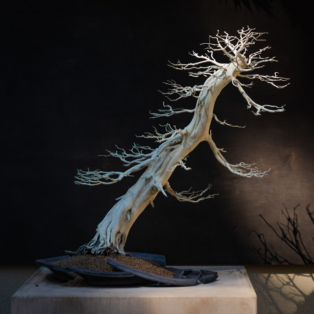 brown tree branch on book