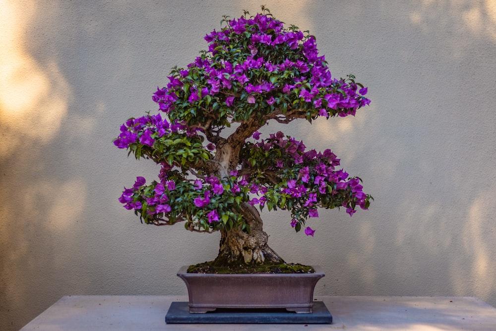 purple flowers on blue ceramic vase