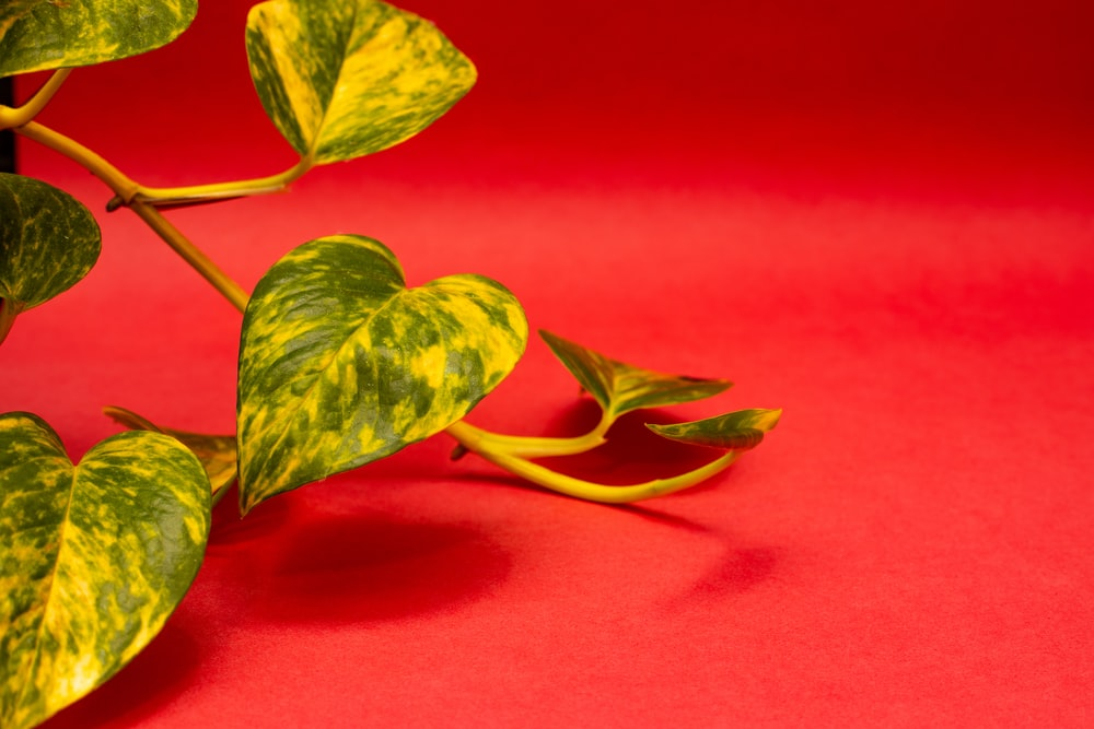 green leaves on red textile