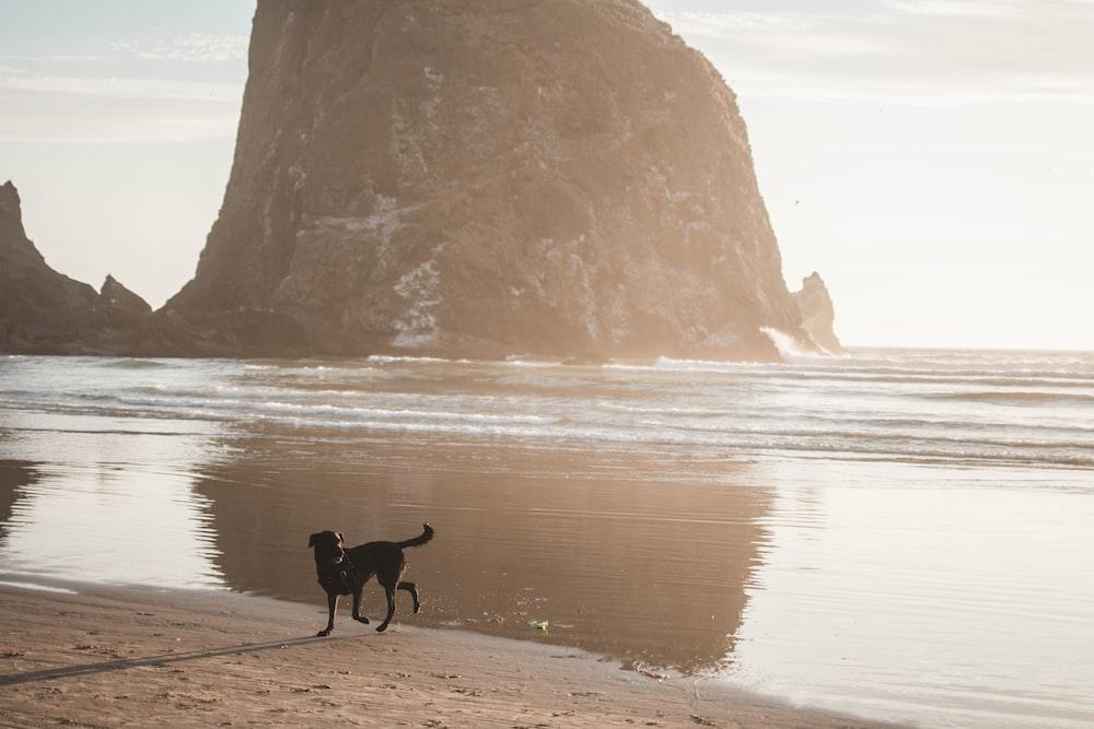 black short coat medium dog on seashore during daytime
