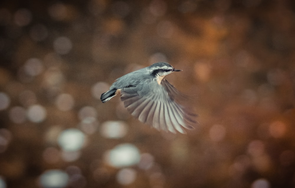 blue and white bird flying